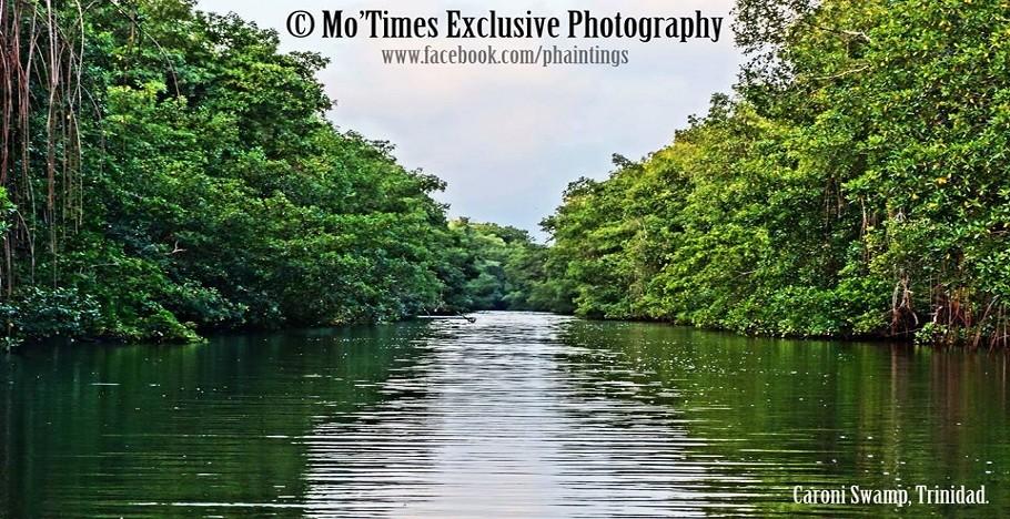 Mo'Times Caroni Swamp Trinidad