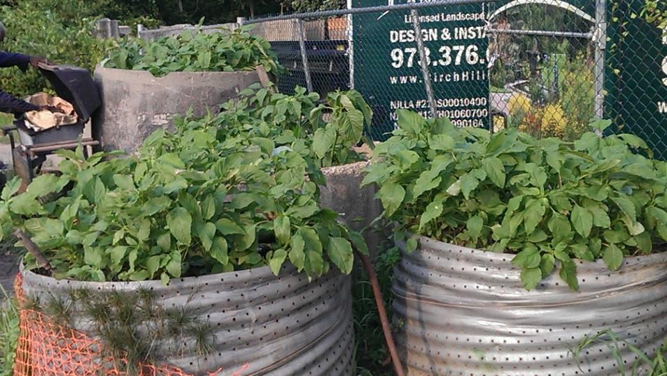 Vegetable garden container ideas photograph container gard for Container vegetable garden designs