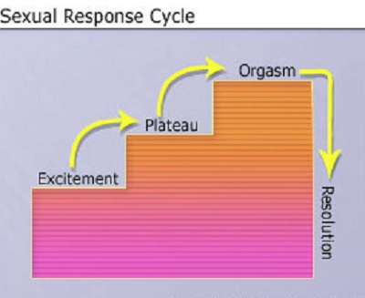 sexual-response-cycle