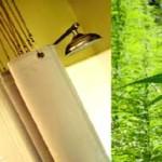 shower-natural-shower-curtain