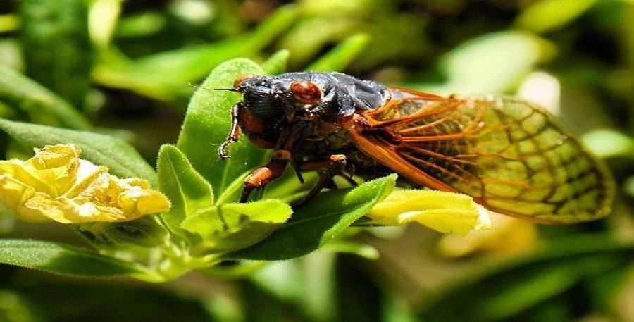 St. Ann Bee On Leaf